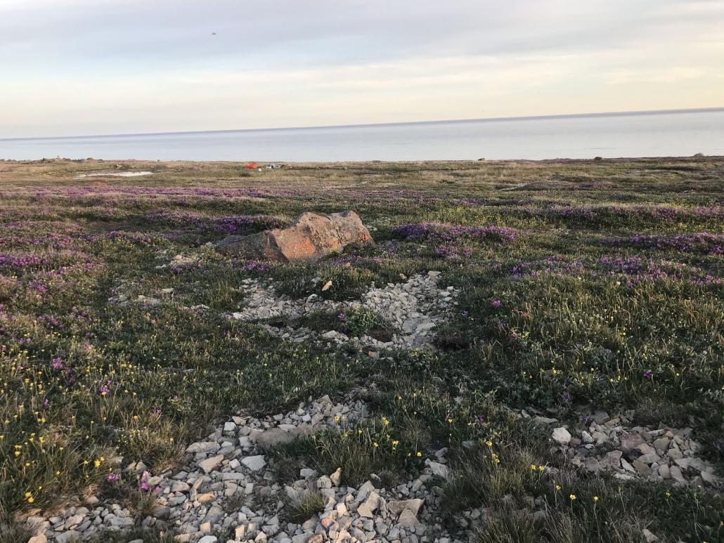 Écosystème de l'extrême arctique canadien