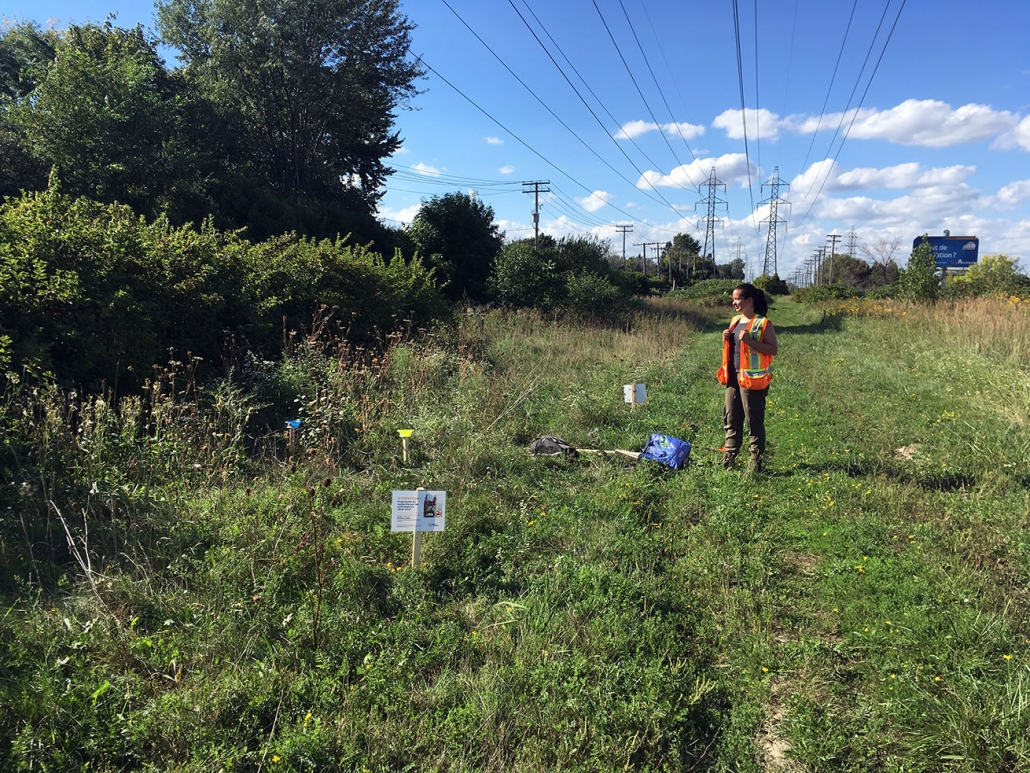 Installation de pièges bols pour la capture d'insectes