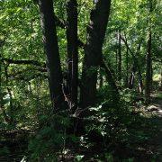 Forêt ouverte